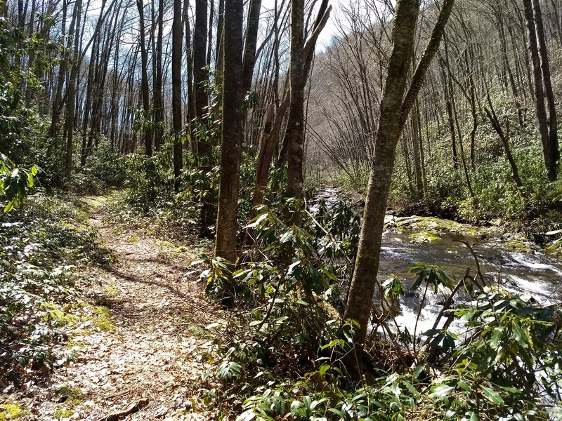 For basically the entire lower half of the Goshen Prong Trail, the picturesque creek parallels the trail offering a steady stream of beautiful cascades to accompany your hike