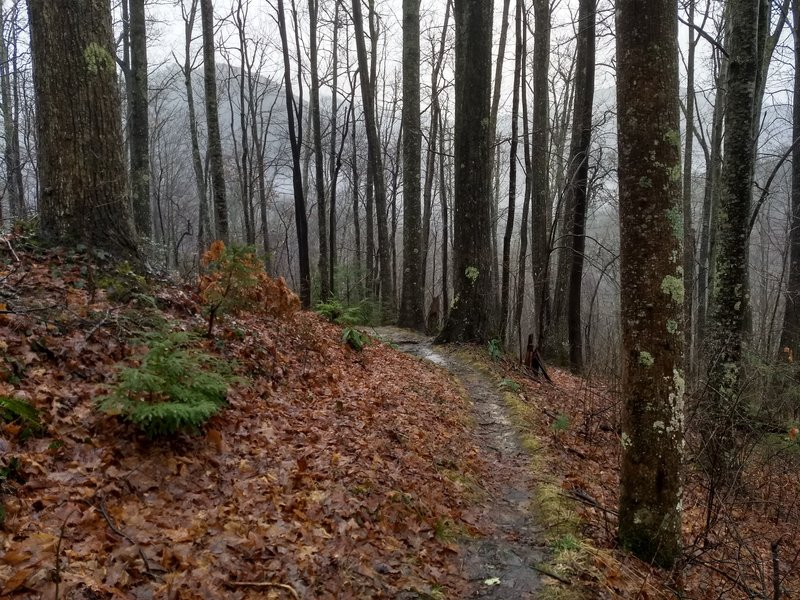 The Huskey Gap Trail descends toward the Little River Trail on a rainy winter day.
