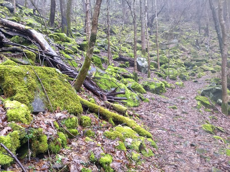 Bright green moss livens up a dreary winter hike on the Huskey Gap Trail.