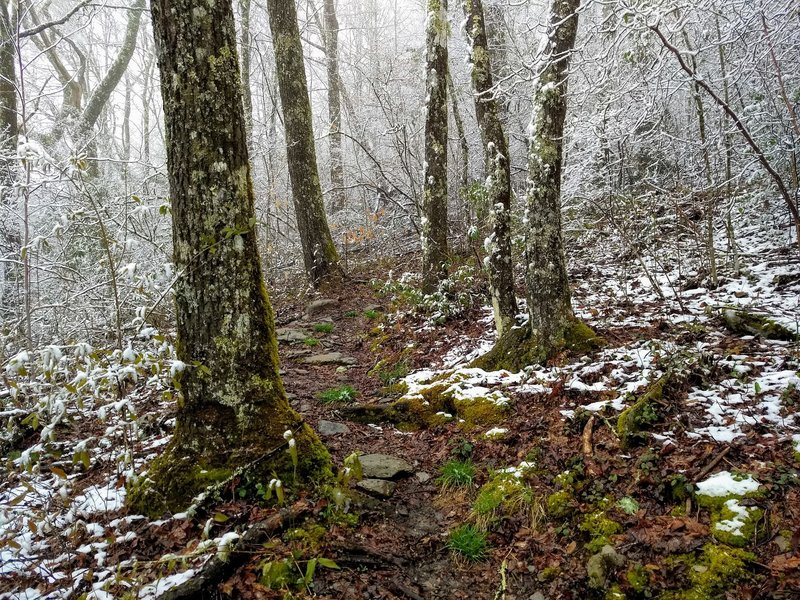 A snowy Spring day on the Jenkins Ridge Trail