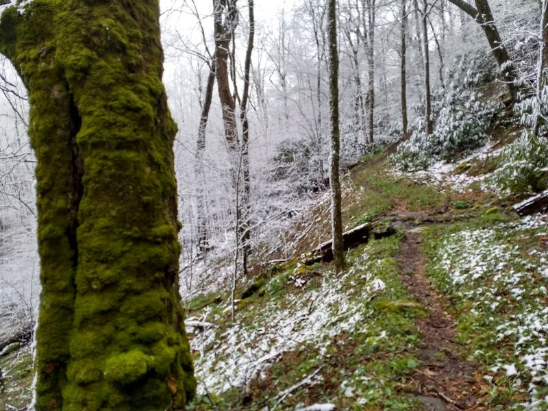 Spring and Winter are one in this late April photo from the Jenkins Ridge Trail, near its terminus at the Appalachian Trail.