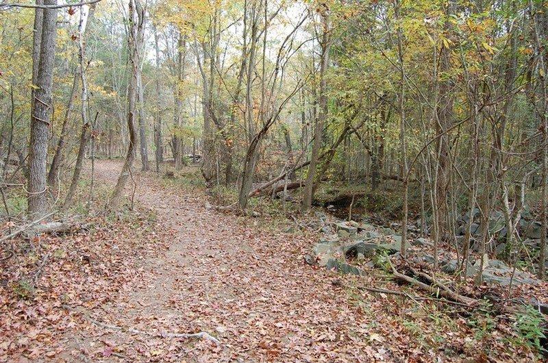 The Falcon Trail