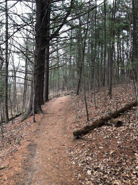 Trail through Pinckney State Park