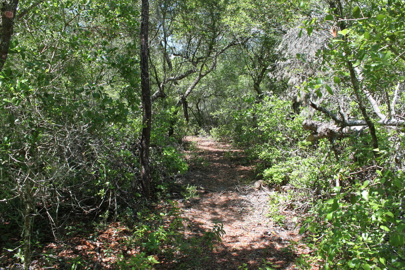 On the trail to the sinkhole