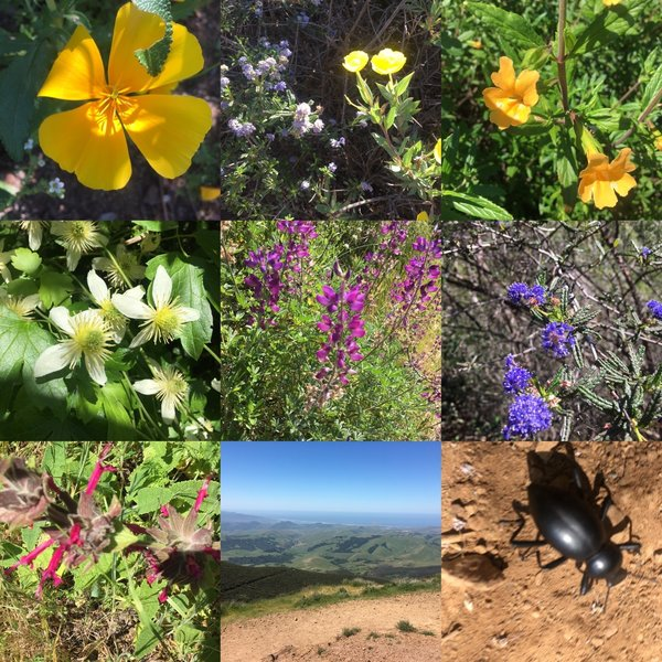 Lots of wild flowers blooming on the trail.
