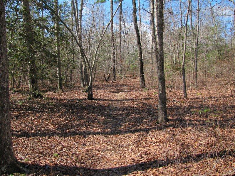 Part of the White Oak Road Battlefield trail.