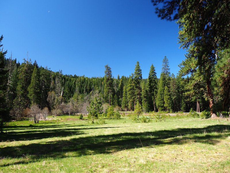 The first meadow