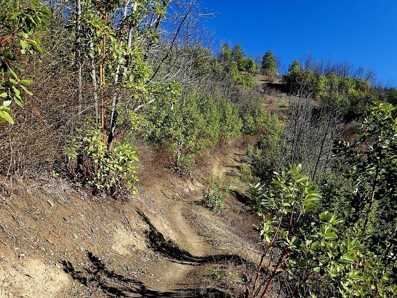 Climbing the Sasquatch Trail.