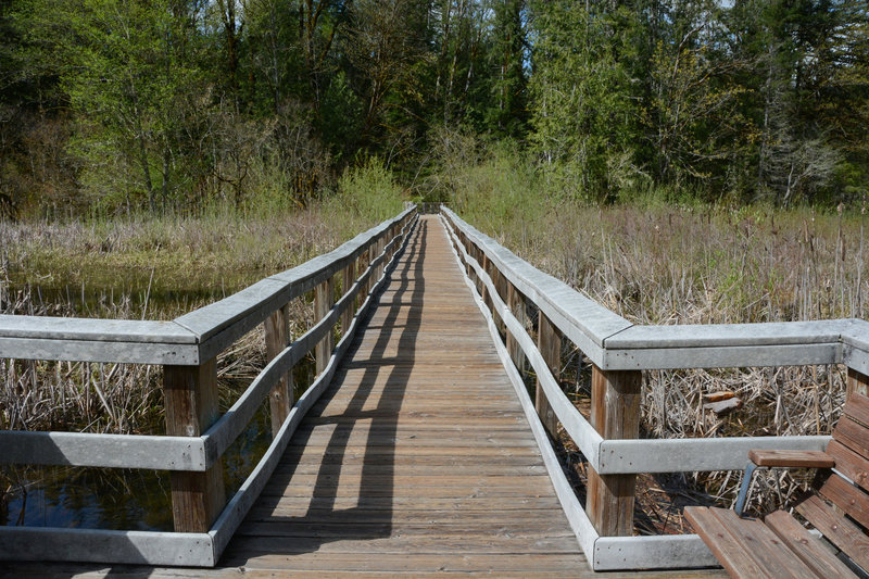 The view back towards the main trail from the end of the Cattail Marsh boardwalk