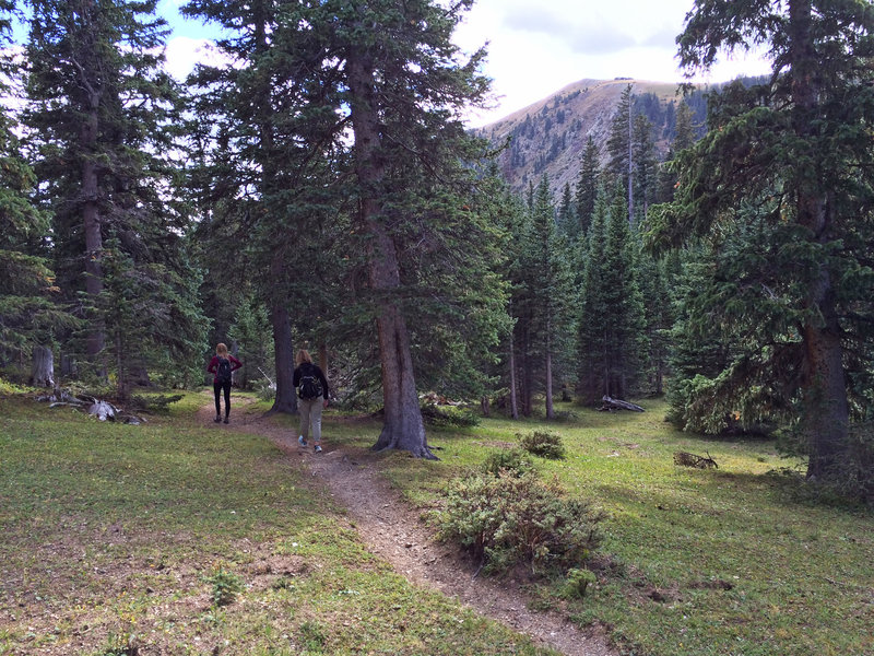 Hiking through the small meadows on the upper end of the canyon.