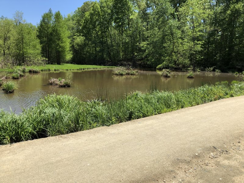 The wetland that's separated from the lake by the trail.