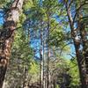 Cañoncito Trail #150