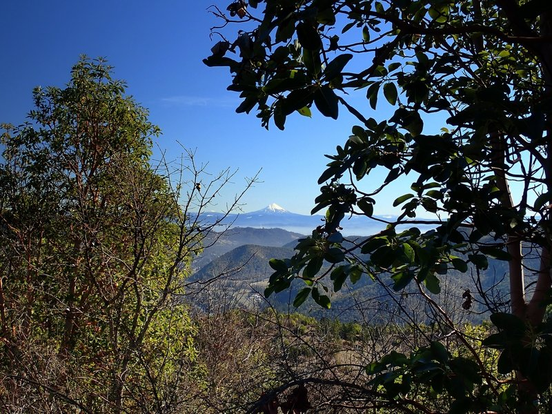 Mount McLoughlin from Tin Pan Peak