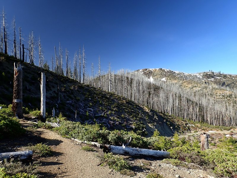Looking south from the Babyfoot Lake Trailhead
