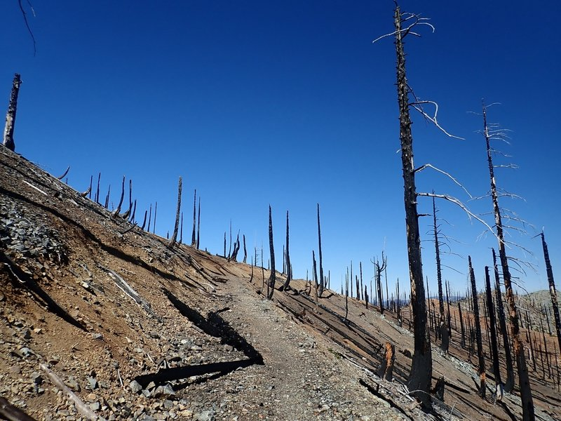 The trail, as an old mining road, passes through the devastation of the 2017 Chetco Fire