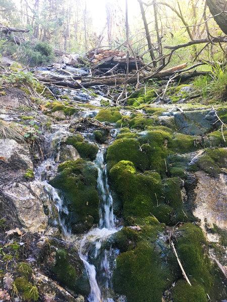 Water flowing amongst moss blanketed rocks