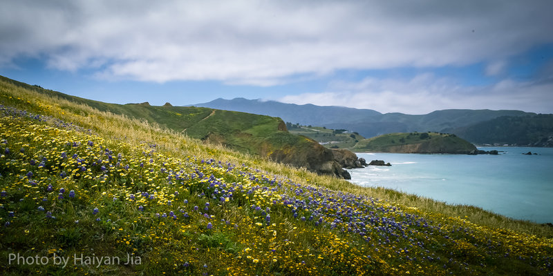 spring flowers at Mori Point
