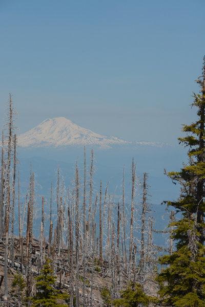 Mt Adams through the burn