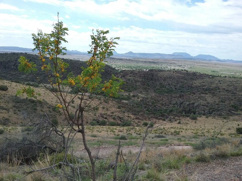 Golden lead ball tree and view of Fort Davis