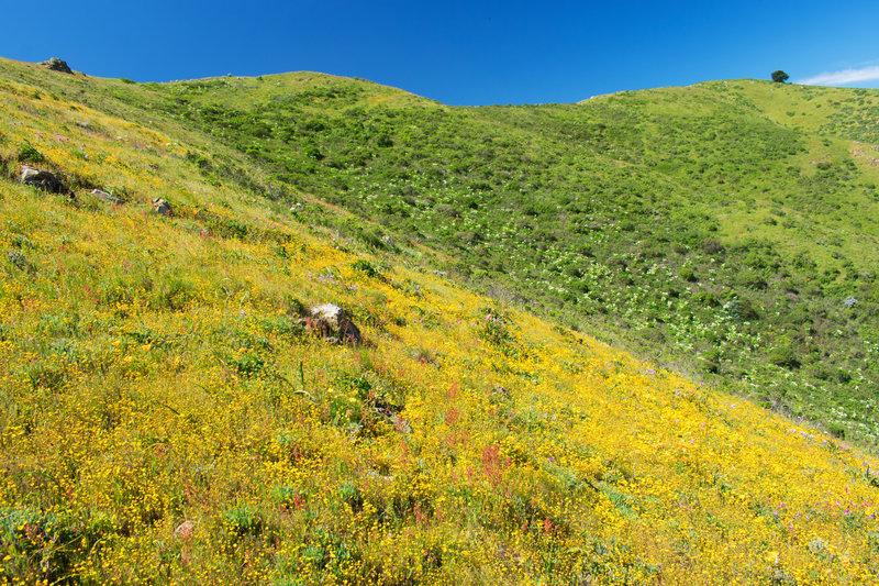 Near top to trail on ridge between Owl and Buckeye canyons