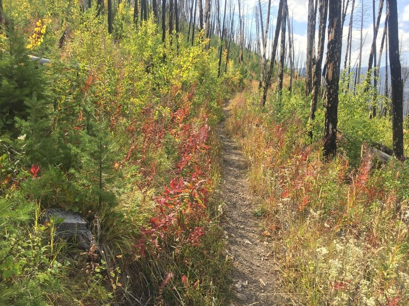 A burned section in autumn.