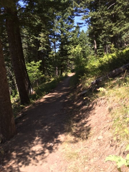 The climbing doesn't stop, but the trail is pretty smooth here.