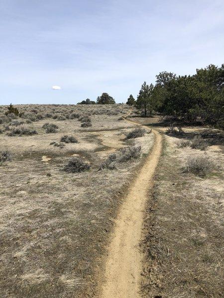 Hi Line trail