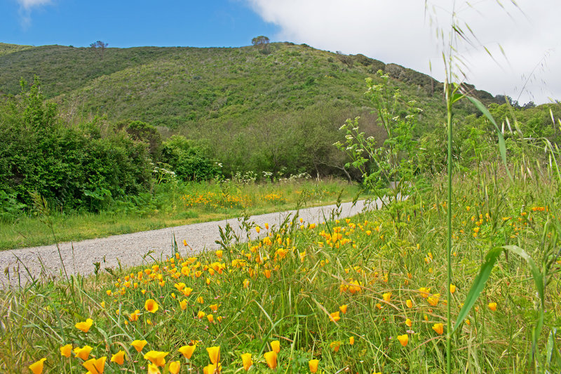 Near end of Weiler Ranch Road