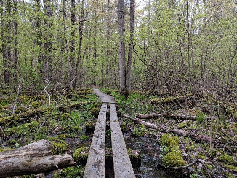 Wooden bridge over swampy bit of trail.