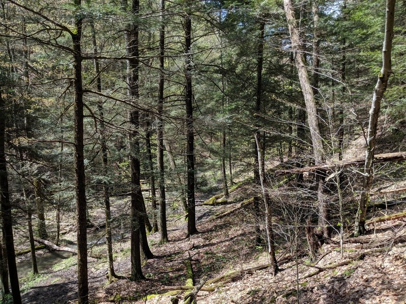 Descending the trail in an evergreen section of forest. Wonder what it will look like in winter.
