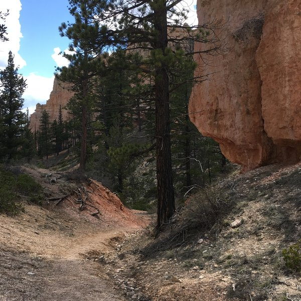 Perhaps not the wow factor of other Bryce Canyon NP trails, but enjoyable rock and views nonetheless.