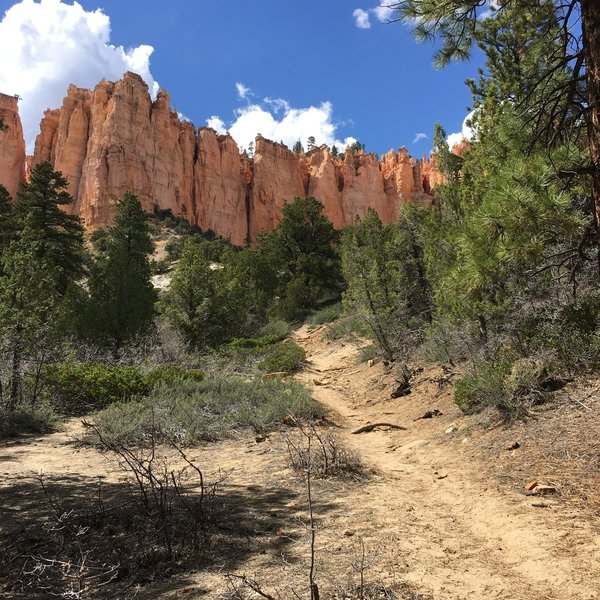 This gentle sandy stretch of Under-the-Rim Trail makes a nice loop possible with Sheep Creek & Swamp Canyon Connecting Trails - a good acclimatization hike for those who live at sea level or have sedentary day jobs.