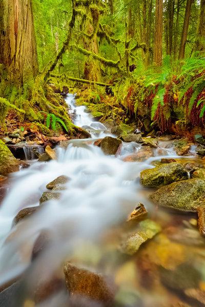 A creek near the Carbon River