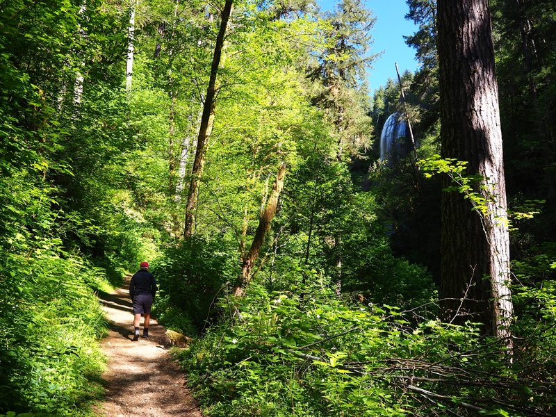 On the trail to the base of Silver Falls.