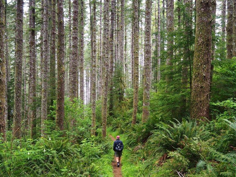 On the Princess Tasha through the forest.