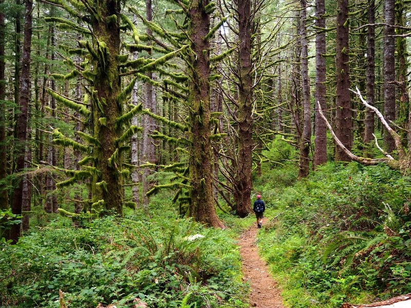 Along the Scurvy Ridge Trail