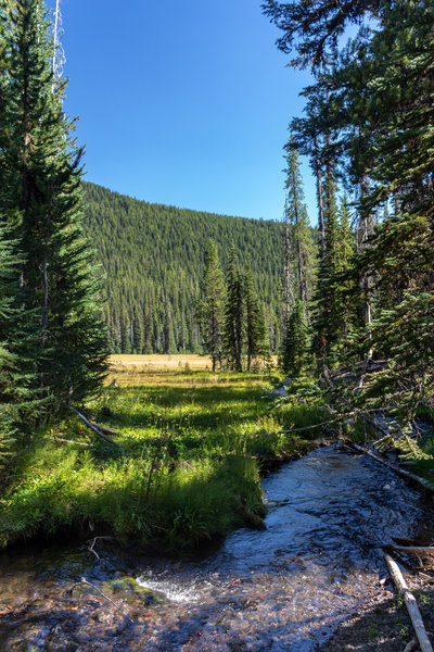 A small tributary to Soda Creek along a beautiful meadow.