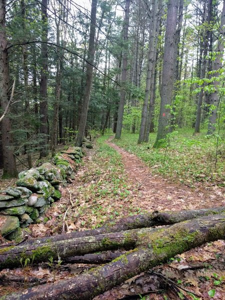 Classic New England trail.
