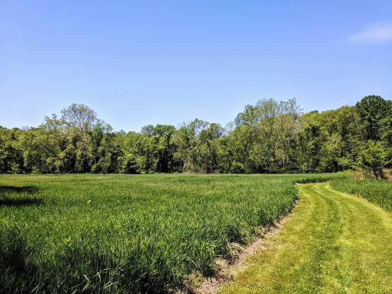 great trail cut thru a meadow that follows the stream