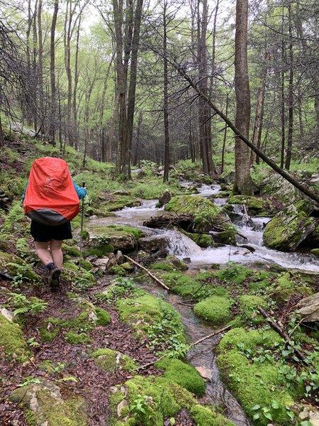 Hiking along Maple Run
