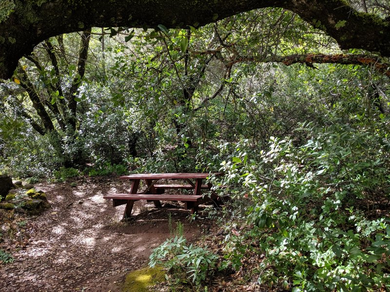 A shady picnic table halfway to the falls.