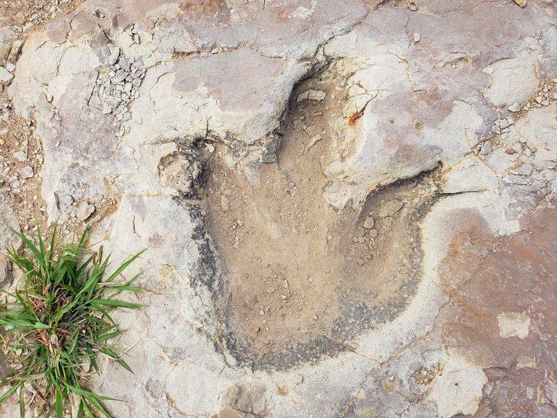 Allosaurus dinosaur print