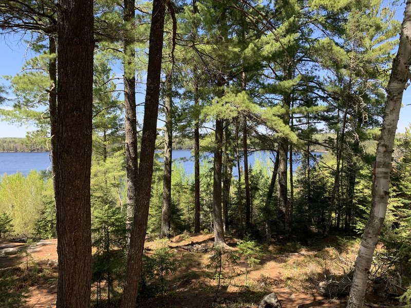 Kabetogama Lake view from trail