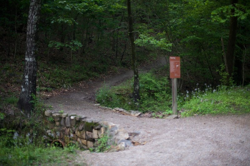The Floral Trail crosses Fountain Street and starts climbing up toward the Lower Dogwood Trail.
