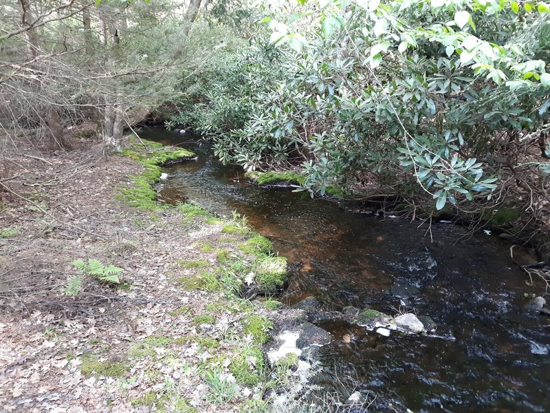 Stream and rhododendrons.