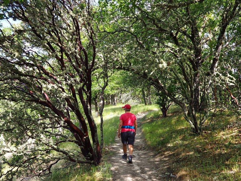Along the Dollar Mountain Trail.
