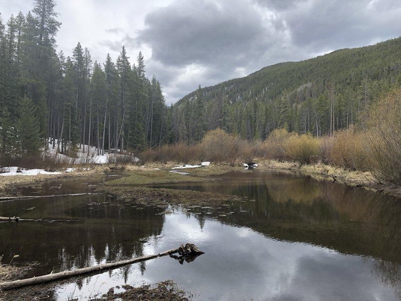 South Fooses Trail beaver pond Memorial Day.