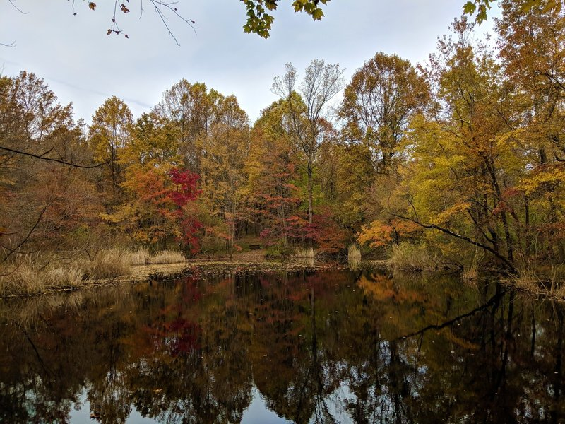 View of Peaceful Pond in fall foliage.