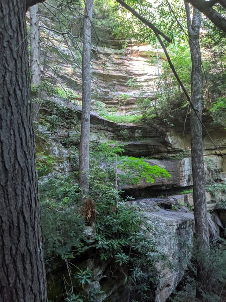 Along the climb up from the Rockcastle River.