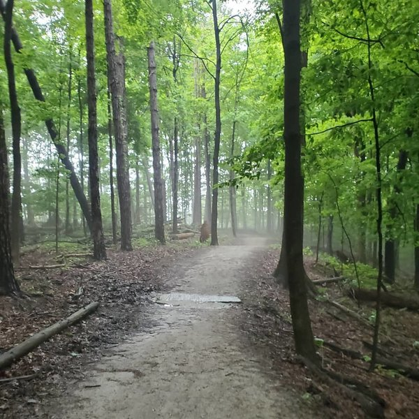 Beautiful foggy woods.
